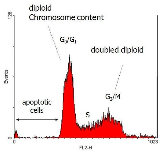 flow cytometry essay